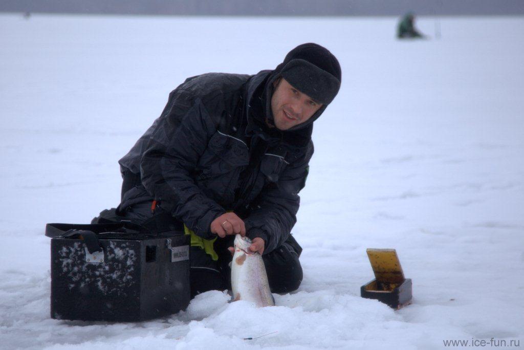 форель со льда